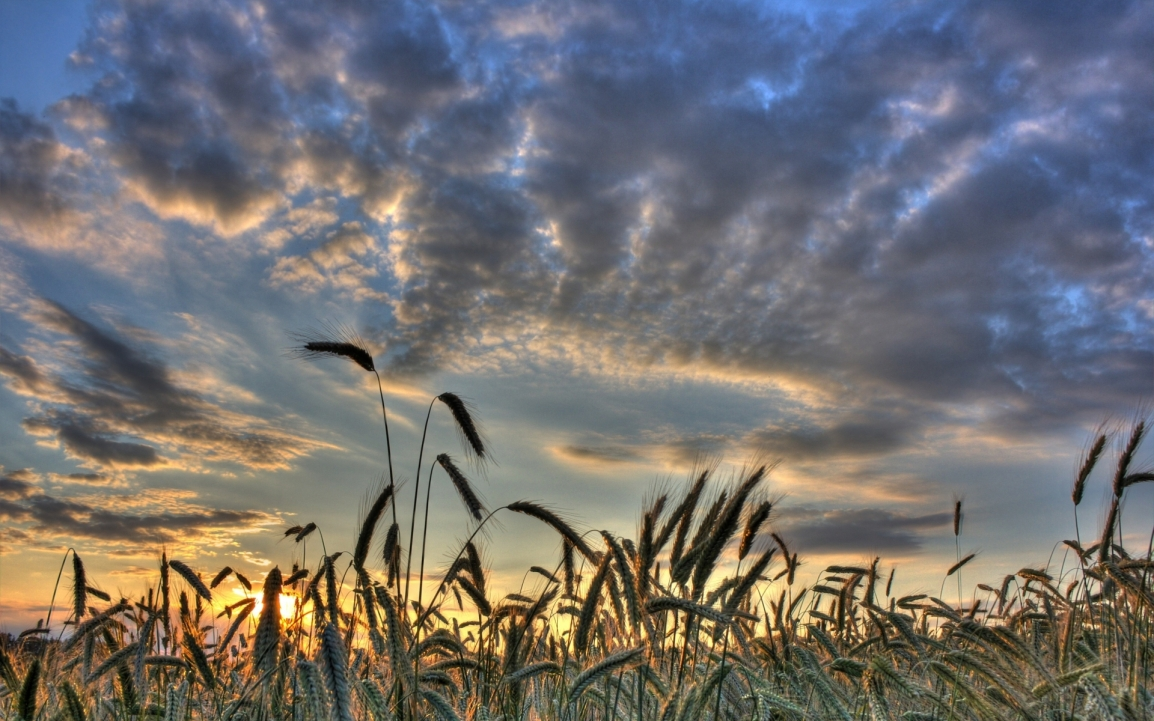 Where's the low-gluten wheat? Why today's GMOs areinvisible