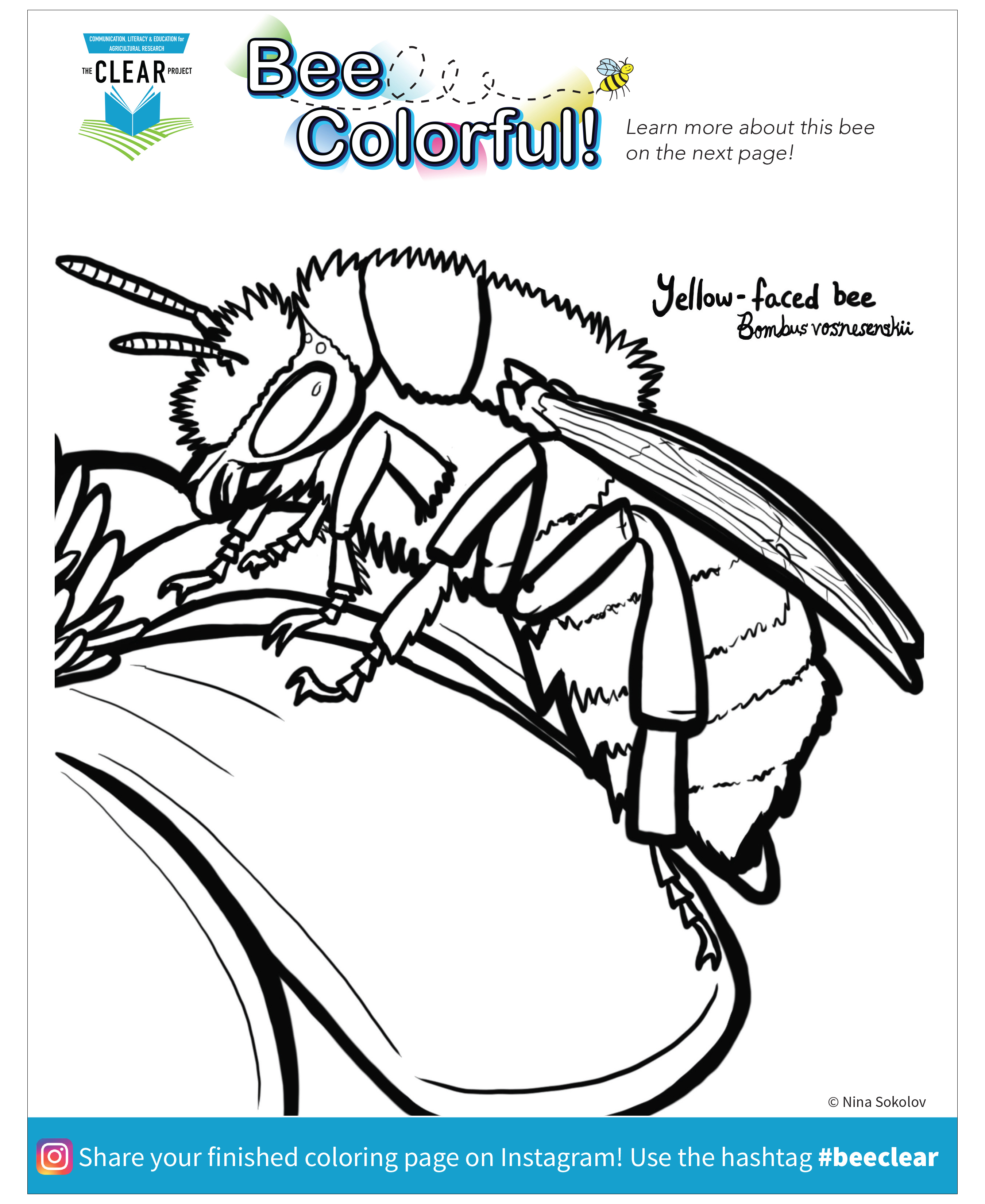 Yellow-faced bee coloring page